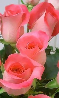 Rosas, ramo de rosas, enviar rosas, 12 rosas rojas, ramode 12 rosas rojas, ramo rosas, ramo de 12 rosas, ramo de 24 rosas, ramo de rosas blancas precio